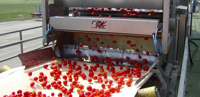 Inspect all types of tomatoes with speed up to 100 tons per hour.