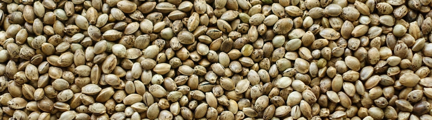 Let's make cannabis seeds