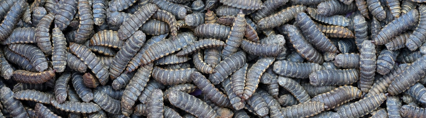 Let's make insect protein